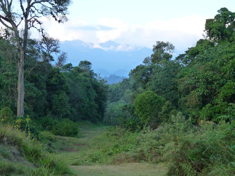 http://www.jvanderw.nl/tripreports/Kenya2009/P1010390.jpg